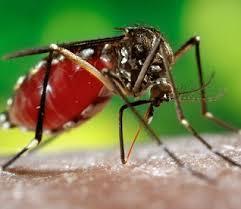 Обережно, малярія!